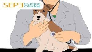curso de auxiliar veterinaria